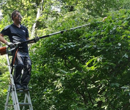 Man schneidet den Straucher mit der Teleskop-Gartenschere